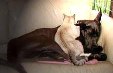 """Annie & LaLa performing their """"Siesta"""""""