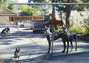 Colreridge Blues Front Gate