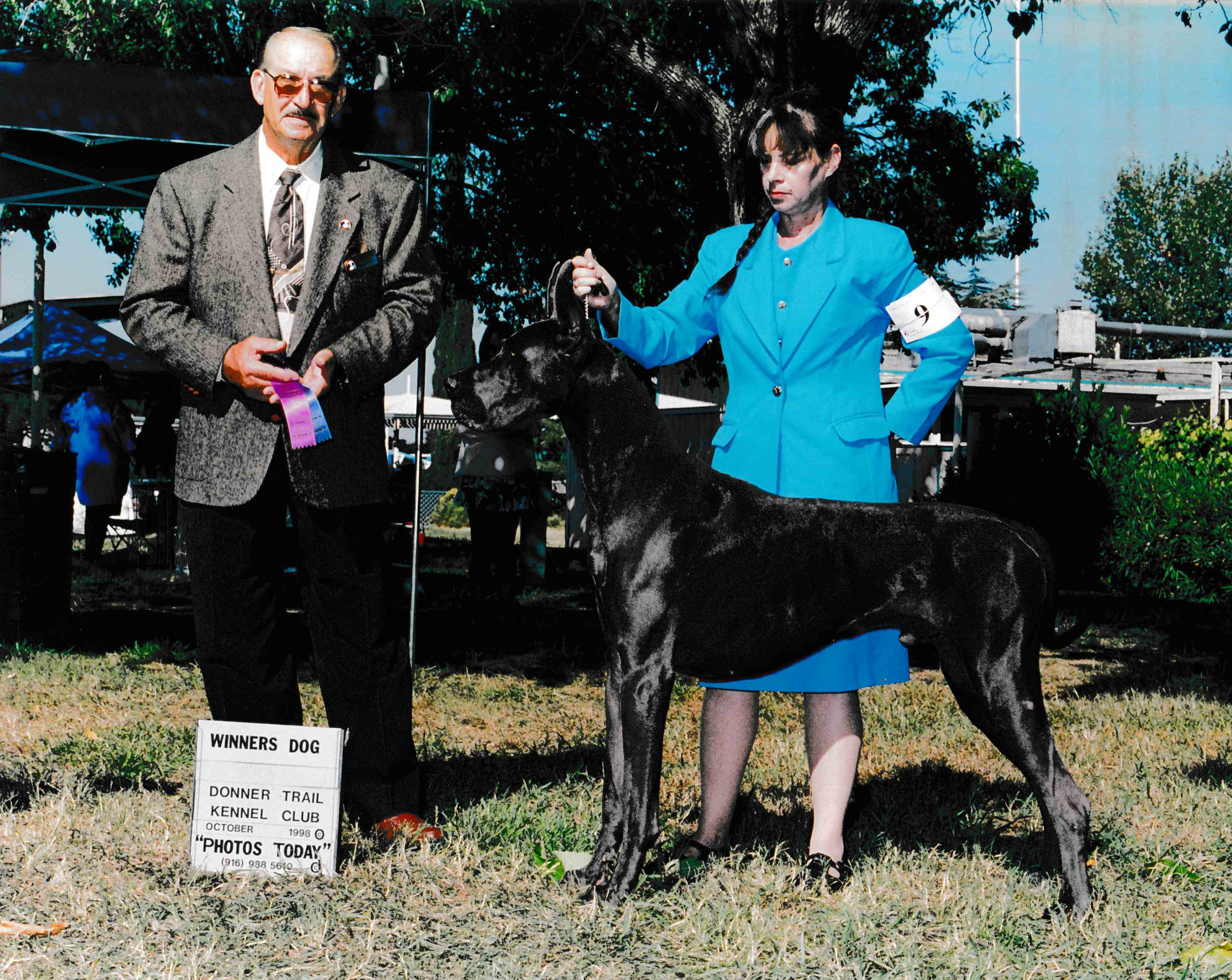 Bandit - Blue Great Dane Champion