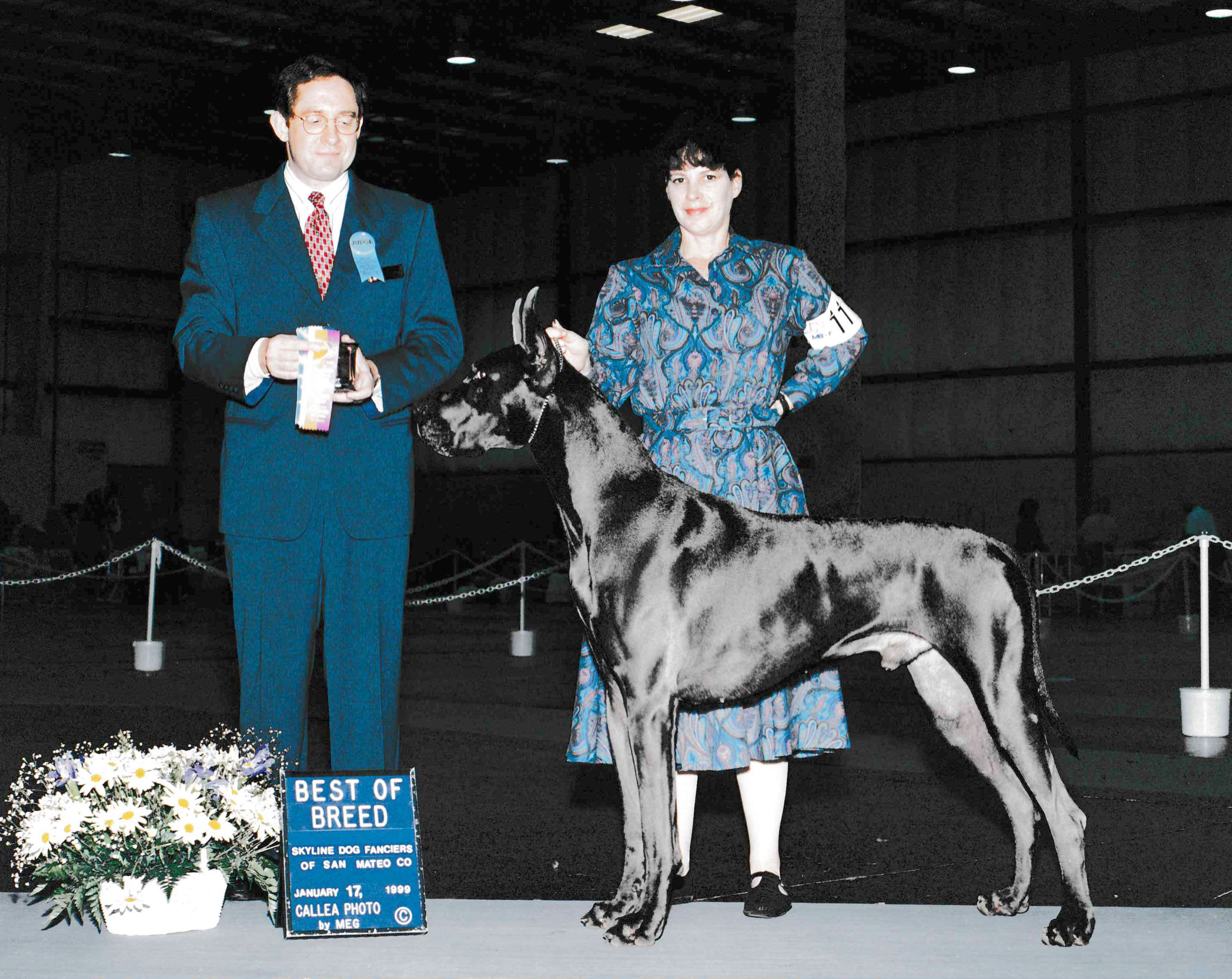 Bandit- Blue Great Dane Champion best of breed
