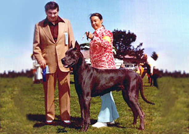 Curtis - Blue Great Dane Champion