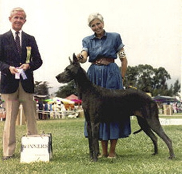 Garbo - Blue Great Dane winner