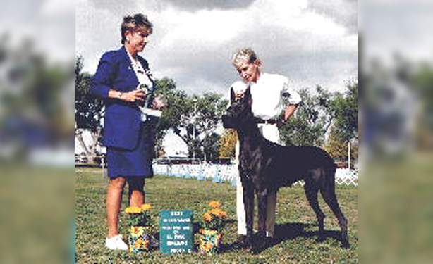 Jazz Blue Great Dane