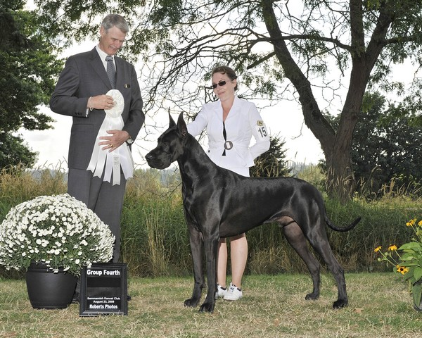 Justin- Blue Great Dane Champion