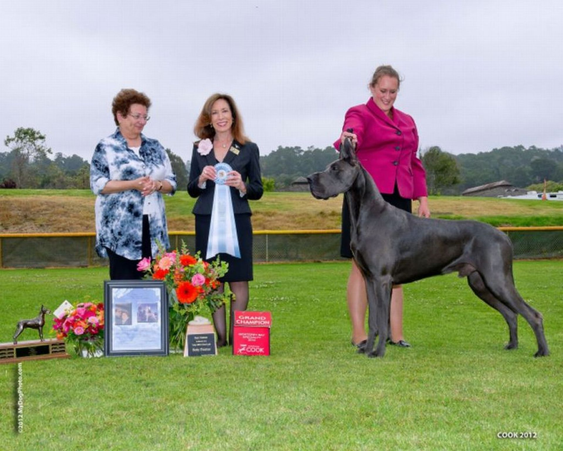 Sully - Blue Great Dane Grand Champion