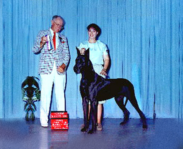 Titan - Blue Great Dane Champion